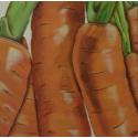 Zanahorias 30x30